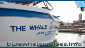 Blue-Whale-Cruises-Day-Trip