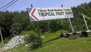 Tropical Fruit Farm